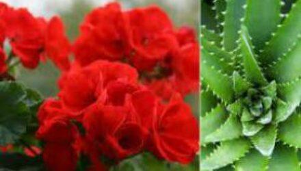 5 забытых цветов наших бабушек, которые вылечат всю семью
