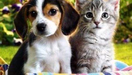 Какие есть правила содержания собак: возьмите на заметку