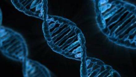 Геном микроскопических водорослей указал на третью ветвь зеленых растений
