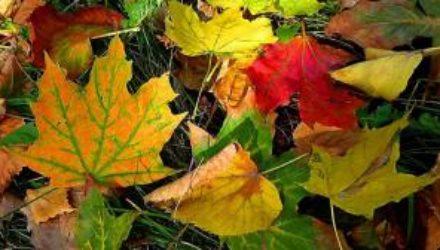 Опавшая листва может стать причиной вирусных заболеваний