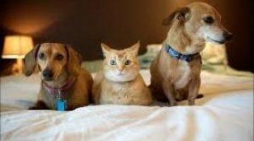 В Украине хотят посчитать и зарегистрировать котов и собак: сколько это будет стоить для хозяев