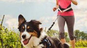 Собачий ошейник расскажет о здоровье питомца