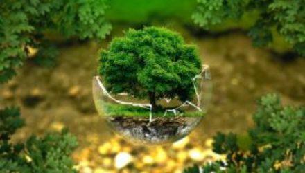 Экологичность как образ жизни