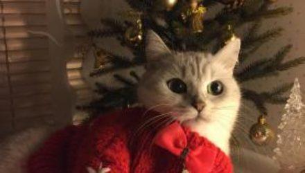 Как улучшить праздничное настроение и подготовиться к Новому году: советы психолога