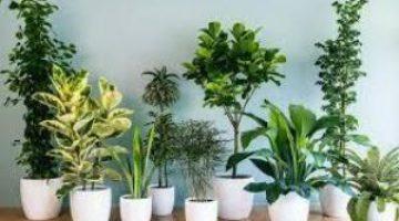 От них лучше избавиться: комнатные растения-вредители
