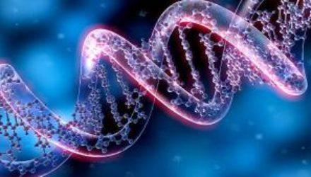 Редактирование генома позволило мышам с прогерией дожить до старости