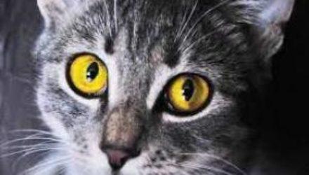 Кошки помогают детям с аутизмом справляться с болезнью
